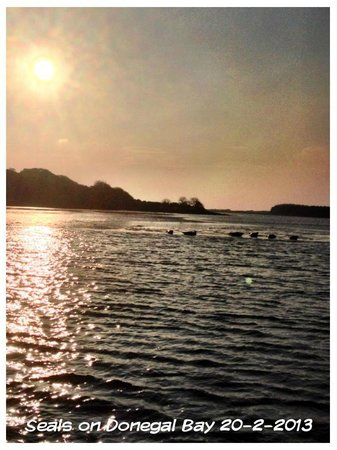 Donegal Town, Ireland: The seal colony on Donegal Bay in the evening sun