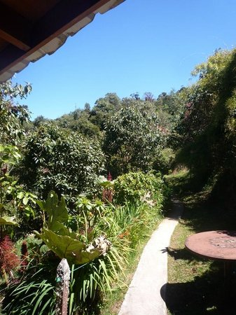 Paraiso Quetzal Lodge: From the room towards the restaurant