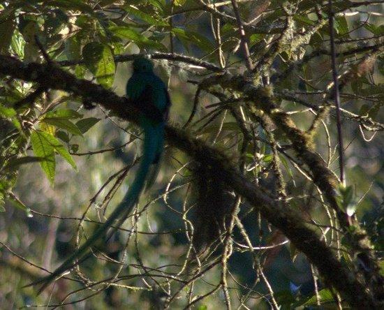 Paraiso Quetzal Lodge: Quetzal