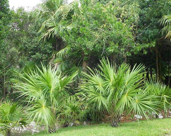 Valentin Imperial Riviera Maya:                   Palms