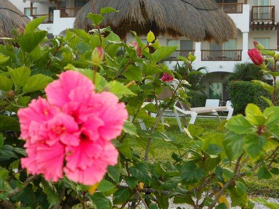 Valentin Imperial Riviera Maya:                   flower garden by #7