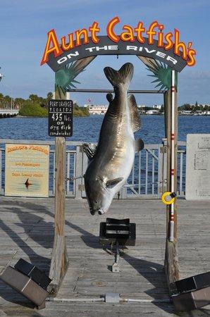 A great restaurant picture of aunt catfish 39 s on the river port orange tripadvisor - Aunt catfish port orange fl ...