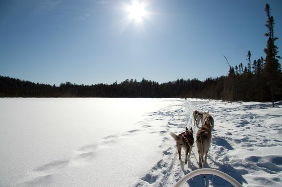 White Wilderness Sled Dog Adventures:                   Mushing across the lake