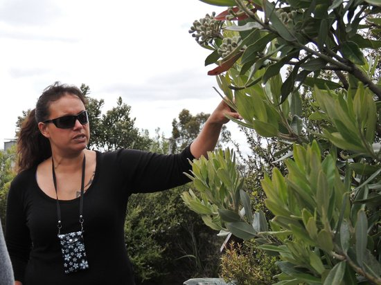 Whakarewarewa - The Living Maori Village: our guide describing native plants and their medicinal properties