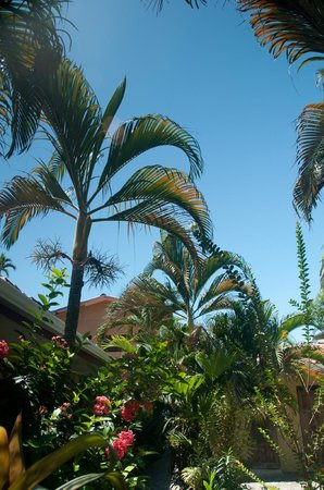 Sandpiper Hotel:                   gorgeous palms, tropical plants & flowers surround the hotel