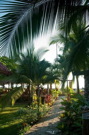 Sandpiper Hotel :                   palms, flowers & tropical plants everywhere around the Sandpiper