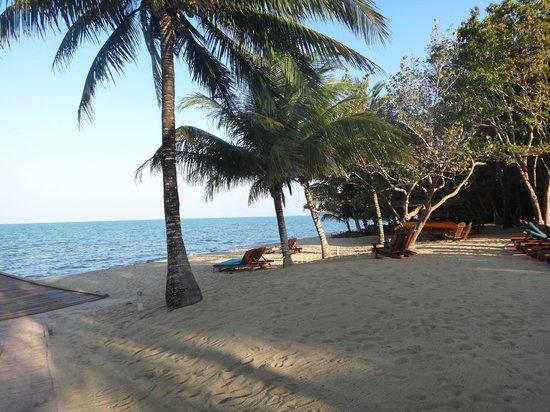 Hamanasi Adventure and Dive Resort:                                     Beach