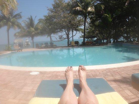 Hamanasi Adventure and Dive Resort:                                     Pool