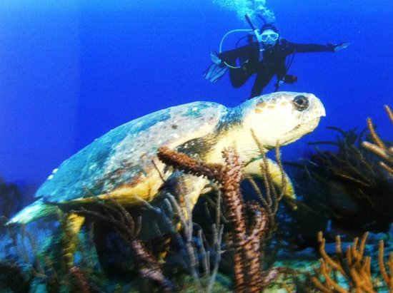 Jupiter Scuba Diving:                   Turtle and ME in Jupiter December 2012
