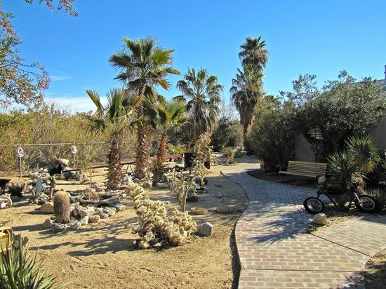 Sunnyvale Garden Suites Hotel - Joshua Tree National Park: View of the garden