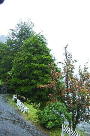 Cruce Andino Puerto Montt / Bariloche Day Tours: Arboles y vegetación de la zona