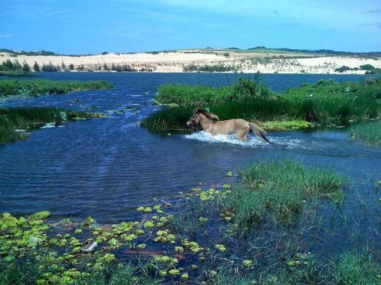 Wyspa Chincoteague, Wirginia:                   swimming pony