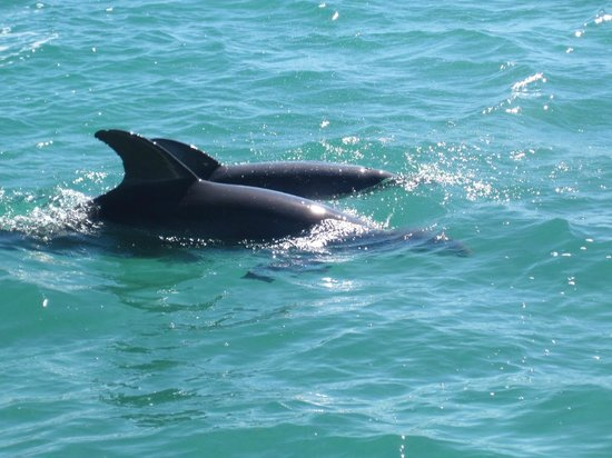 Key West Water Tours : Dolphins aren't the only mammals who enjoy playing on the water