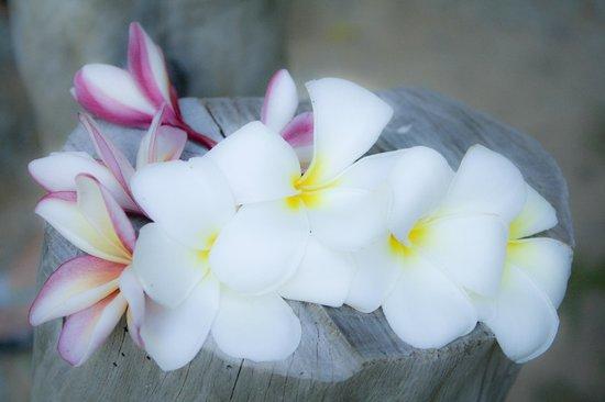 Hotel Cote D'Or:                   fiori frangipane