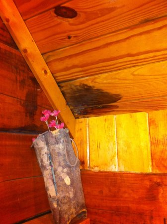 Creekwalk Inn and Cabins:                                                                         Random stain in ceiling