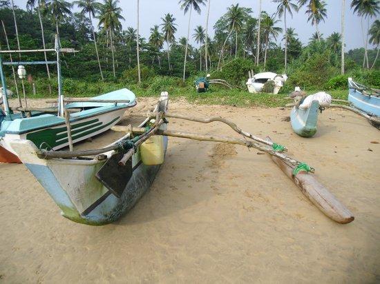 Talalla Retreat:                   Beach with wild dogs...