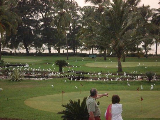 The Leela Goa:                   Hotel Gardens