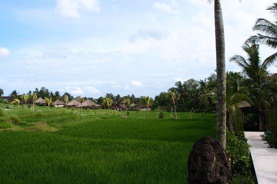 Wapa di Ume Resort and Spa: View on the way to the pool