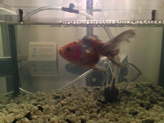 Maximilian Hotel: our borrowed goldfish!