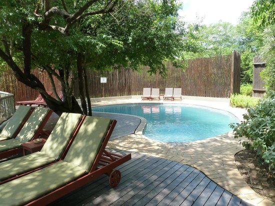 Sabi Sabi Bush Lodge: Pool