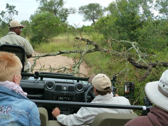 Sabi Sabi Bush Lodge: Rangers