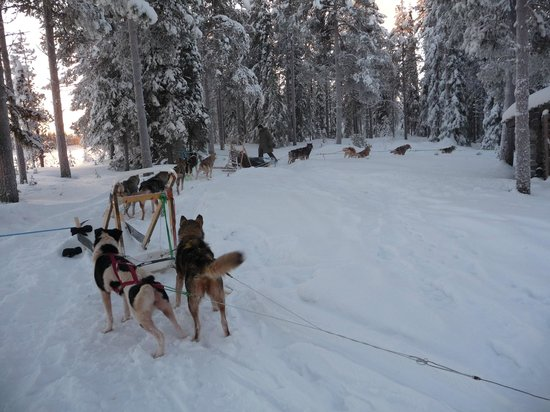 Lapland Guesthouse:                   Midday rest on the husky ride
