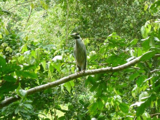 oiseau à Papillote Tropical Gardens