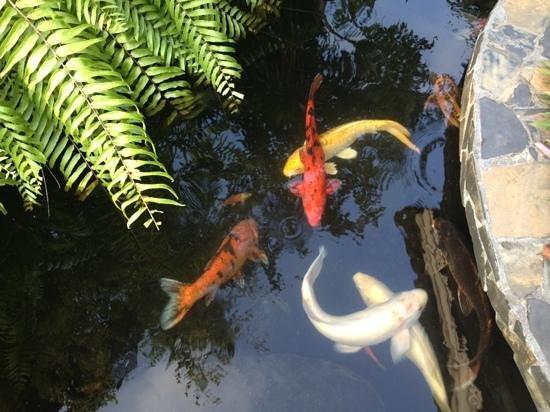 Samui Sense Beach Resort: разноцветные рыбки возле ресепшн