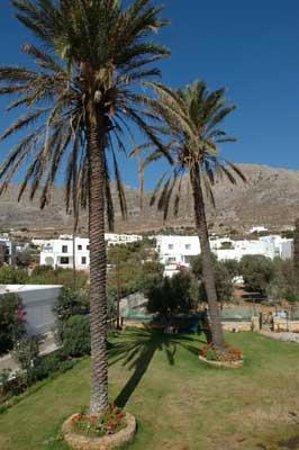 Atlazia Apartments :                                     Palms in the garden