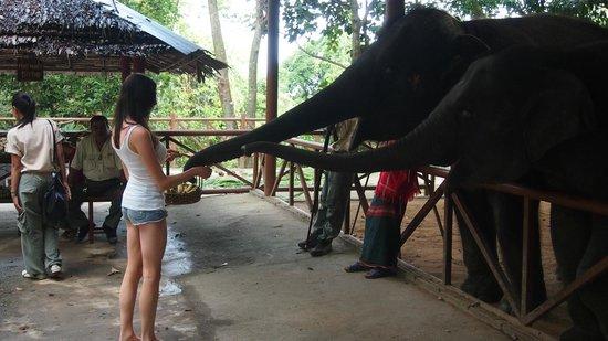 Siam Safari:                   Me feeding the baby elephants