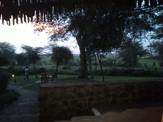 Amboseli Serena Safari Lodge:                                     view from terrace.