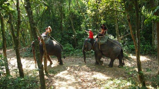 Siam Safari:                   Great morning