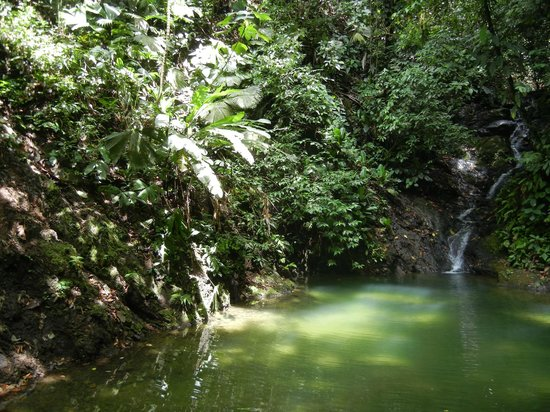 Finca Valmy Tours:                   Spring fed waterfall