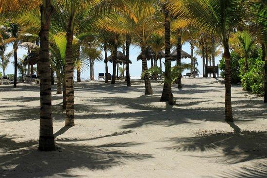 Grand Palladium Riviera Resort & Spa :                   Plage