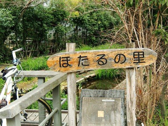 Mishima, Japan:                   ホタルを育てています