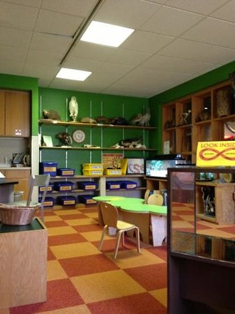 North Museum of Nature and Science:                   The exploration room has blue tubs full of great educational activities!