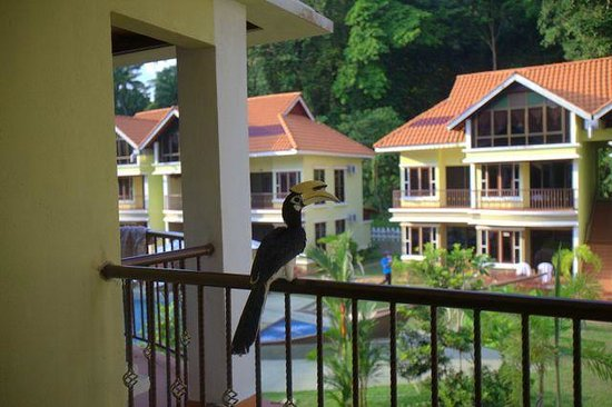 Anjungan Beach Resort: hornbill on my balcony