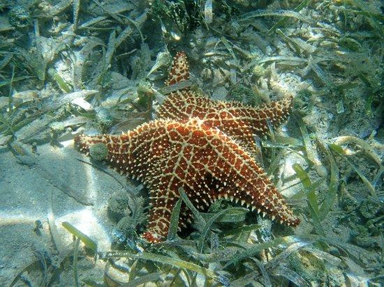 Hurricane Hole: Star Fish, Princess Bay