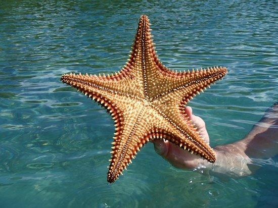 Hurricane Hole: Star Fish in Princess Bay