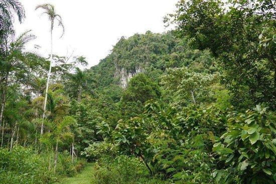 Villa Jennifer :                   Path to Stream