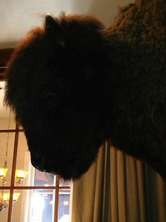 The Wort Hotel:                   Buffalo Head to greet you at front desk