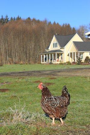 The Inn At Crippen Creek Farm:                   The Inn in winter