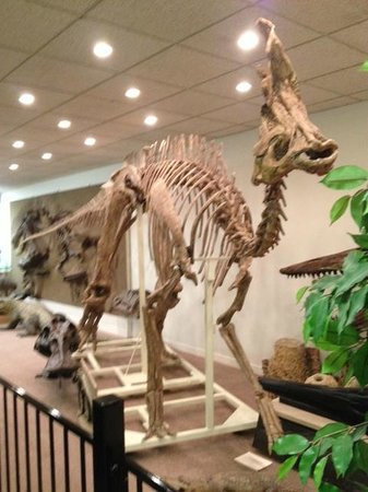 """Stones 'n Bones Museum :                   Dinosaur fossils are among the many attractions at the """"Stones & Bones Museum"""""""