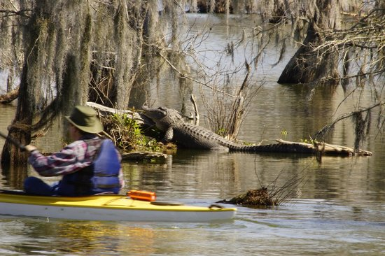 Champagne's Cajun Swamp Tours:                   Kayaking on Lake Martin