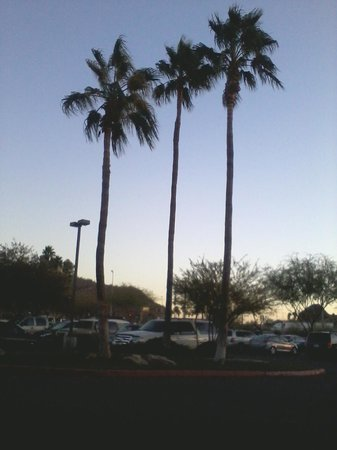 شيراتون فينيكس إيربورت هوتل تمب:                   Just clicked a picture of some palm trees while waiting for my ride.         