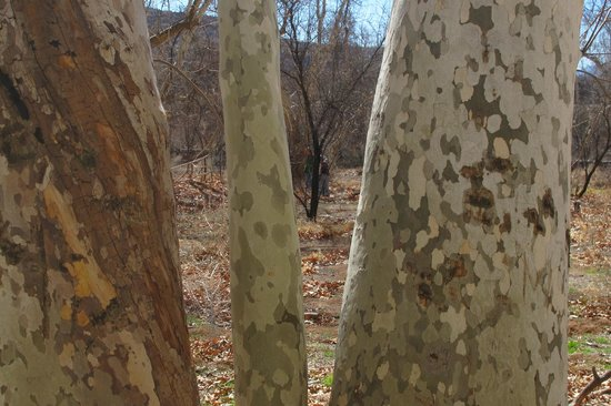 Montezuma Castle National Monument: Trees look painted