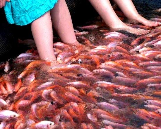 Balapitiya, Sri Lanka:                   At Fish Farm