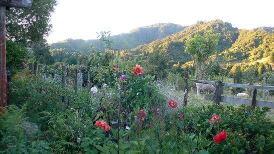Motu Road :                   Toatoa garden view