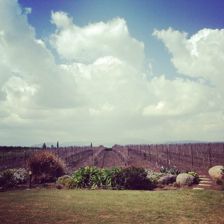 ‪‪Barbakfar‬:                   View of the vineyards behind the dining area