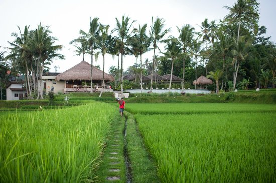 Kenanga Boutique Hotel:                   view from the Gazebo they have in the middle of the rice field